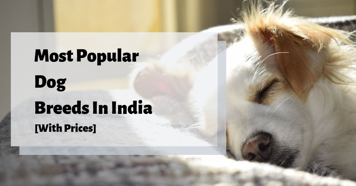 11 Most Popular Dog Breeds In India [With Price] - Petriever