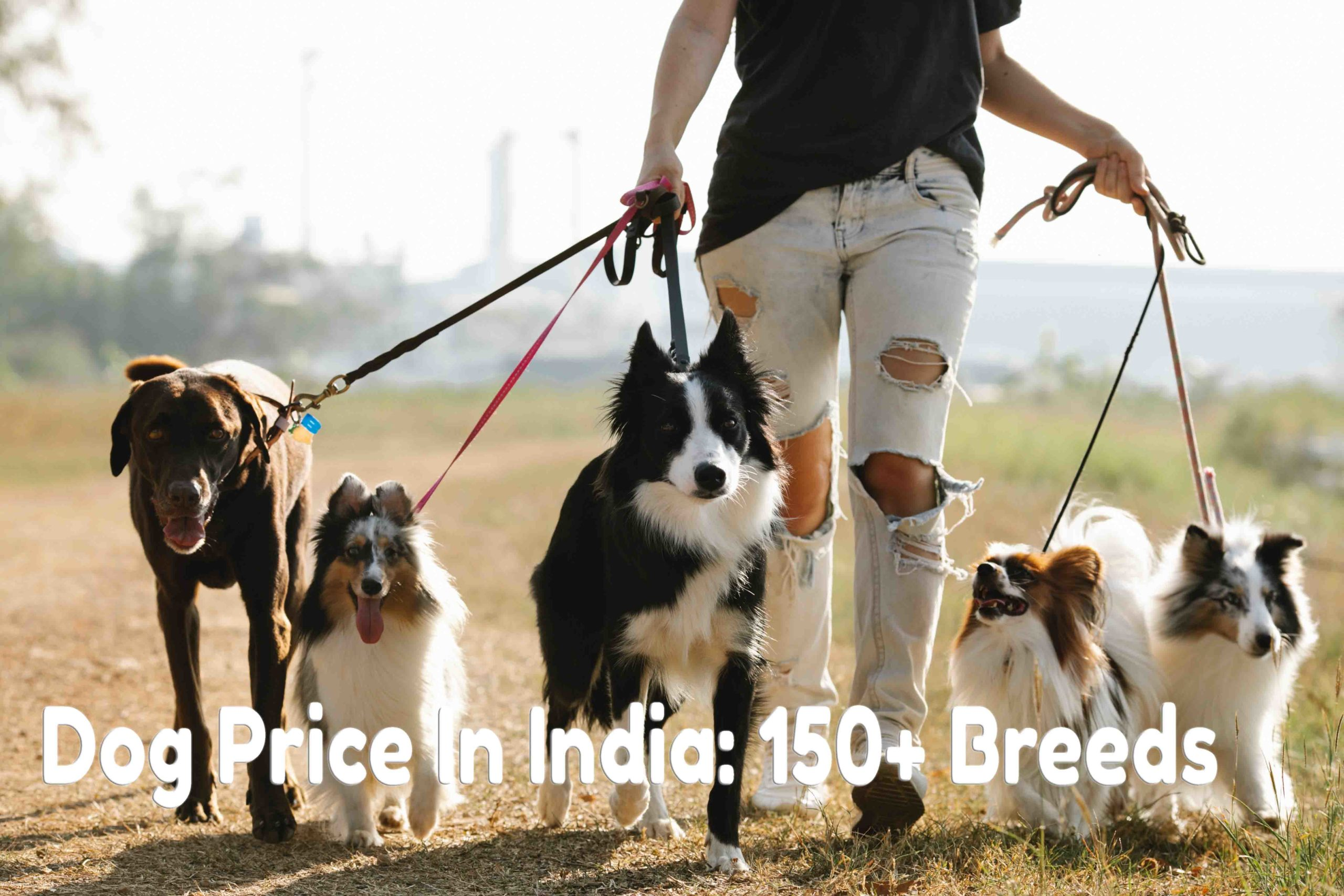 dog price list in india
