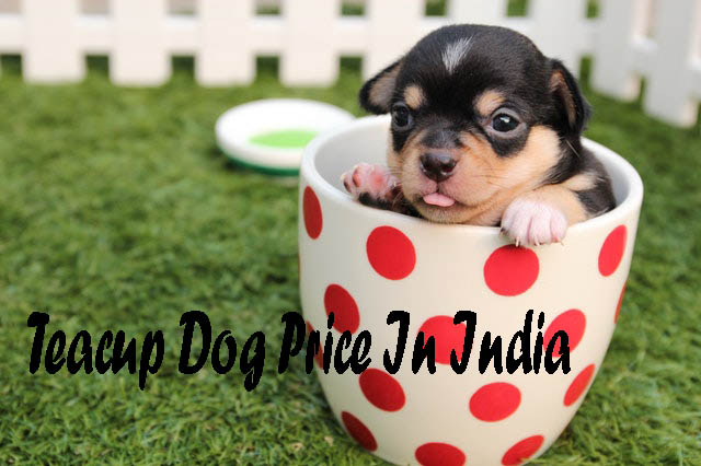 teacup dog price in india